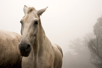 The White Beauty in the Fog